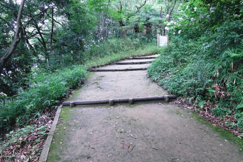 生駒山 ぬかた園地 あじさい園