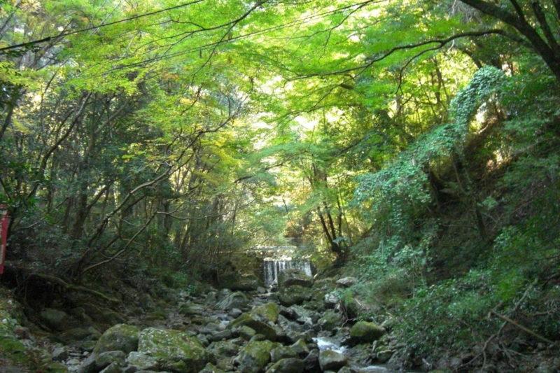 犬鳴山 犬鳴川渓流