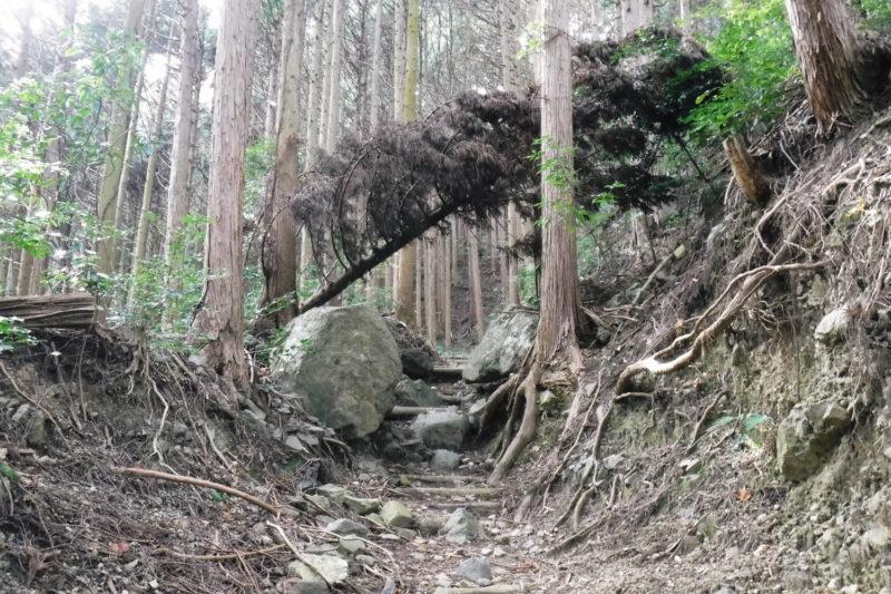和泉葛城山 丁石道(地蔵さん登山道)