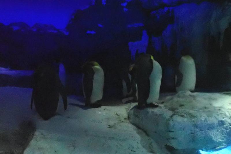 夜の海遊館 ペンギン