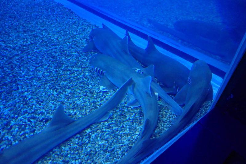 夜の海遊館 サメ