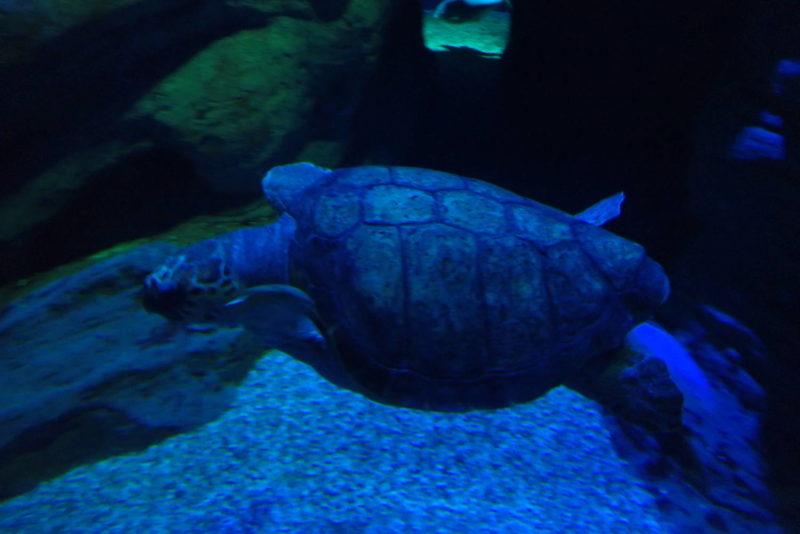 夜の海遊館 ウミガメ