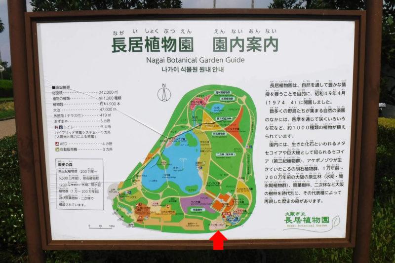 大阪市立長居植物園 ひまわり