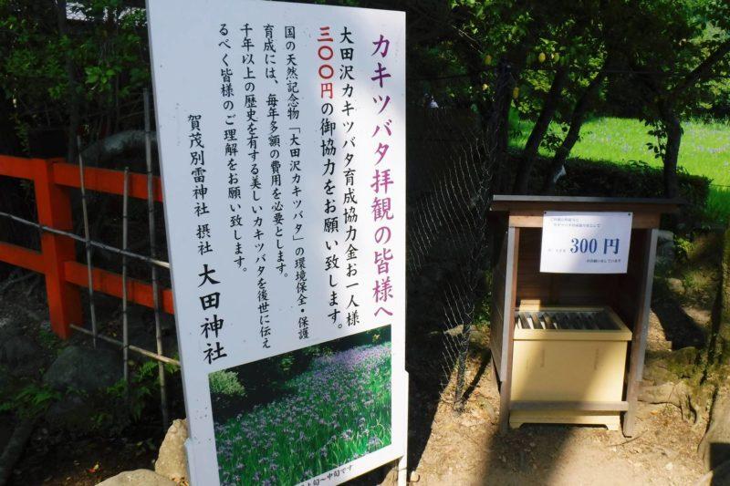 上賀茂神社摂社 大田神社 カキツバタ